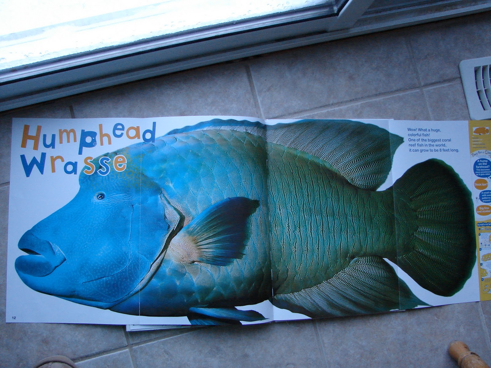 there are two other books in this series life size zoo and more life size zoo we will be looking for these at our library - Colorful Fish Book